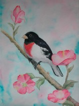 Rose breasted grosbeak, watercolor by Patti Blair